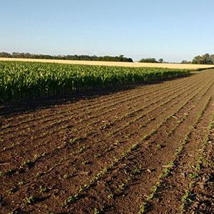 Que hacemos Agricultura